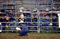 Saddlebroncing Rodeo show. Row of men in blue jeans and checked shirts. Western style hats.