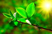 fresh spring branch