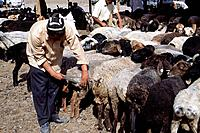 Town. Sunday livestock market. Old man seated with shears. Shearing wool off sheep,goats.
