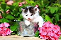 3 weeks, flower, flowers, garden, house, home, Animal, domestic animal, pet, young, cat, jug, kitten, tiger, Tigerli, vase, tub, Zuber, outdoors, outs...