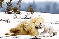 Wapusk National Park, Canada.