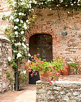 The warm climate in Tuscany in Italy means its simple to successfully grow a wealth of colourful flowers which are easy to grow against walls.