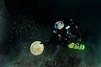 Scuba Diver discover plate at Infidel Ship Wreck, Catalina Island, Channel Islands, California, USA