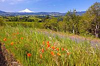 wildflowers growing in a field with a view of mount hood, oregon united states of america