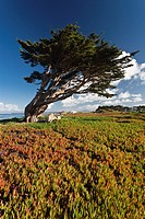 USA, California, Central Coast, Monterey Peninsula, Pacific Grove coastline