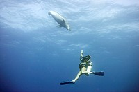 Diver swimming with bottlenose dolphin