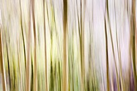 Abstract Impression of Spring Woodland