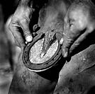 Man Placing Horseshoe on Hoof