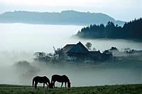 Horses, farm house, Black Forest, Baden_Wuerttemberg, Germany