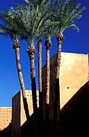 Palm trees in front of the Badii Palace rampart, Marrakesh, Morocco, Africa