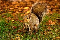 Friendly Squirrel 3