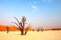 Dead trees in front of red sand dune, Deadvlei, Sossusvlei, Namib Naukluft National Park, Namib desert, Namib, Namibia