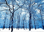winter trees in forest covered in snow bostall wood belvedere kent england uk
