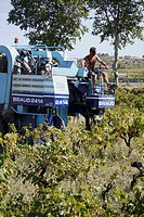 Large grape harvesters are used in the vineyards Southern France, to pick the ripe grapes in September, for the ´vendage.´