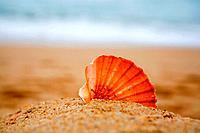 Cockleshell on sand