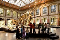 Skeletons of dinosaurs at Berlin Museum of Natural History, Invalidenstrasse, Berlin_Mitte, Berlin, Germany, Europe
