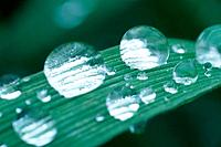 Water droplets on blade of grass