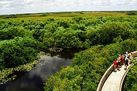 Shark Valley, Everglades Park, Florida, United States