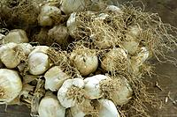 Garlic bundle