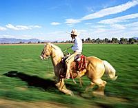 Mexican Cowboy Riding a Horse, Mexico