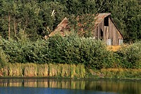 Barn and pond, near Mt  Aukum, El Dorado County, California