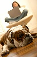 Bulldog Resting near Woman on Laptop