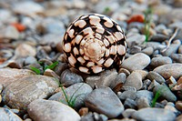 Spiral shells in the gravel