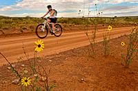 A mountain biker rides down a flower rimmed park road.