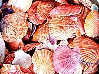 shells bachgroung