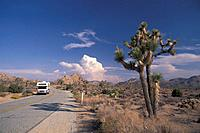 Joshua Tree, National Park, California, USA, United States, America, road, car, RV, camper, car, desert