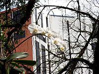 Plant, buildings, orchid, Rio de Janeiro, Brazil
