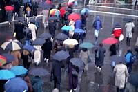Group of Pedestrians with Umbrellas
