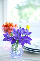 Balloon flowers and cherries on table