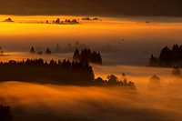 Morgennebel im Kochelmoos, Germany, Bavaria, Kochel