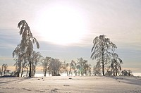 sun is breaking through morning mist over a snow covered landscape, Germany, North Rhine_Westphalia, Hochsauerland