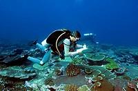 marine biologists at the sea ground on fish survey , Kiribati, Tabuaeran