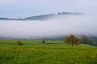 thick veil of fog over a meadow, Germany, Rhineland_Palatinate, Harbach