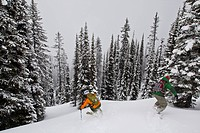 A man skis deep powder in the monashees while cat skiing. Vernon, Britsh Columbia, Canada