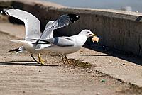 Bird Lunch Time