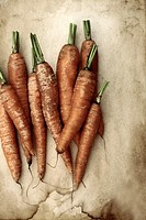 Carrots organically grown on a textured background