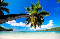 palm tree at idyllic dream beach, Seychelles