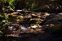 picturesque watercourse through forest, Australia, Victoria, Otway National Park