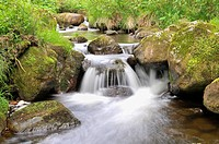 mountain creek, Germany, Baden_Wuerttemberg, Black Forest