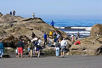 tourists on excursion to the tidepools of the West Coast, USA, Olympic National Park