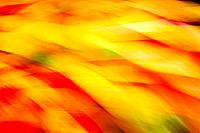 Autumn leaves on ground, close up, blurred motion. Leaves from Japanese flowering cherry tree Prunus serrulata.