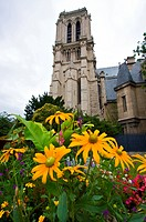the cathedral Notre Dame de Paris looming behind a colourful flower bed, France, Paris