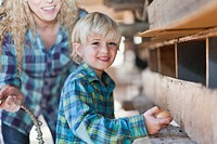 Boy picking eggs from hens