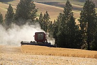 A farmer harvests peas in his field in Fairfield, Washington, USA