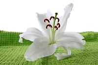 White lilia on green towel
