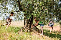 Children playing by tree